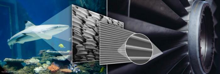 Grafik, in der ein Hai, die Rillenhaut des Hais sowie eine Turbine zu sehen sind.