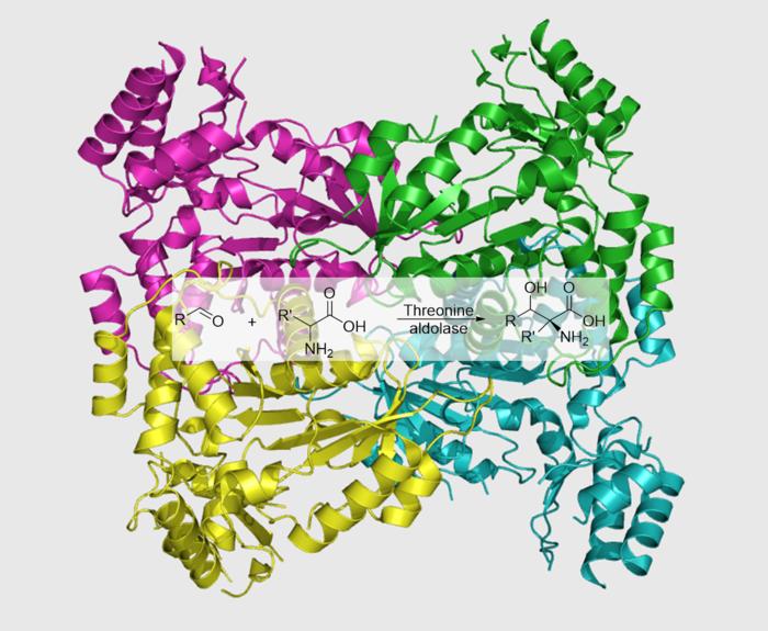 Grafische Darstellung der Struktur einer Threoninaldolase.