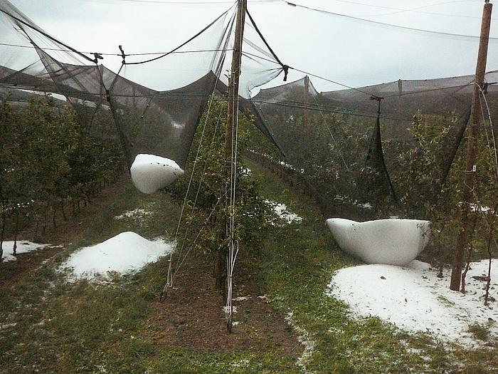 Hagelkörner wurden in Netzen zur Hagelabwehr über einer Obstplantage aufgefangen.