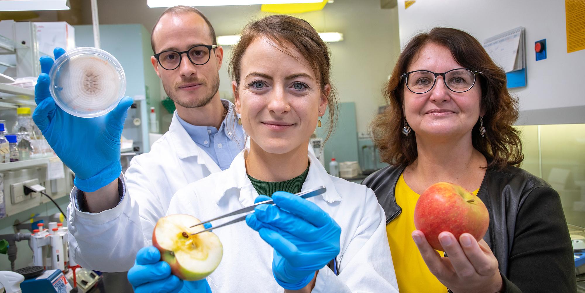 3 Forschende in einem Labor halten Apfel, Pinzette und Petrischale in der Hand