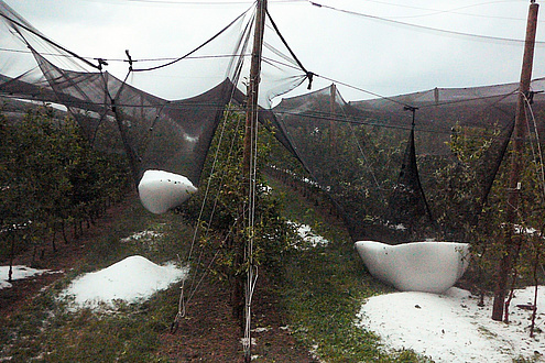 Eine mit einem Hagelnetz umspannte Obstplantage, Hagelkörner wurden im Netz aufgefangen