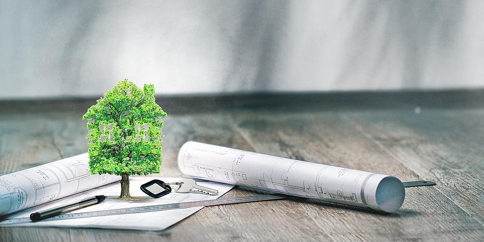 Auf einem hölzernen Tisch liegen mehrere Rollen Papier. Es sind architektonische Pläne. Auf einem der Pläne steht ein kleiner, grüner Baum.