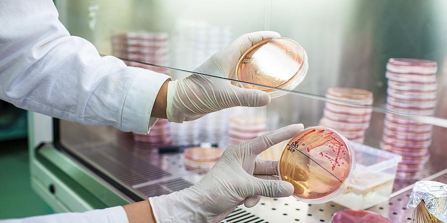 Hände in Laborhandschuhen halten runde transparente Behälter.