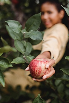 a boy holds an apple in his hand