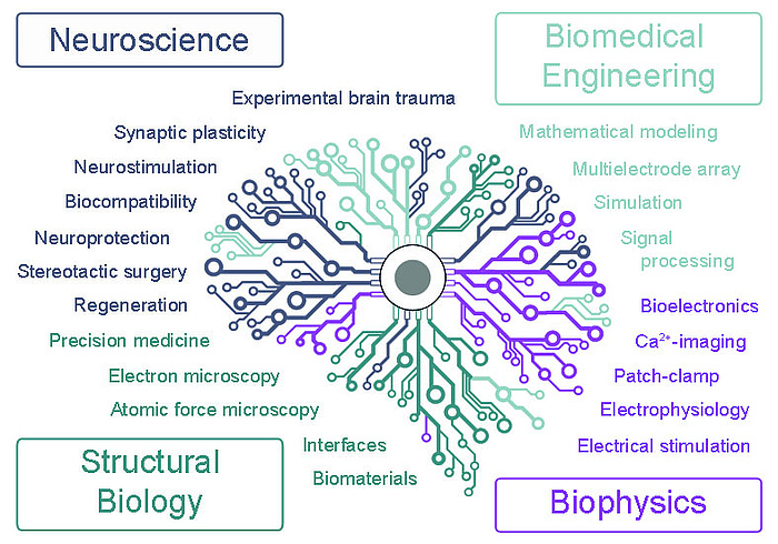 in the middle of picture a schematic of a brain is shown. There is a cube at all four corners of the picture - in each corner there is a field of research: Neuroscience, Biomedical Engineering, Strucutral Biology, Biophysics. Neuroscience consists of Experimental brain trauma, synaptic plasticity, neurostimulation, biocompatibility, neuroprotection, stereotactic surgery, regeneration. Biomedical engineering consists ofmathematical modeling, multielectrode array, simulation, signal processing. Structural biology geconsists ofhören precision medicine, electron microscopy, atomic force microscopy, interfaces, biomaterials. Biophysics consists of bioelectronics, ca2+-imaging, patch-clamp, electrophysiology, electrical stimulation.