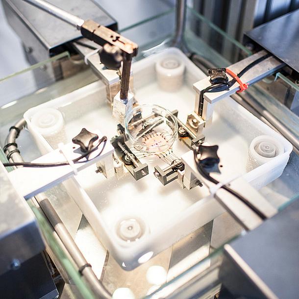 Petrischale in einem biotechnischem Gerät. Bildquelle: Grumet – BioTechMed