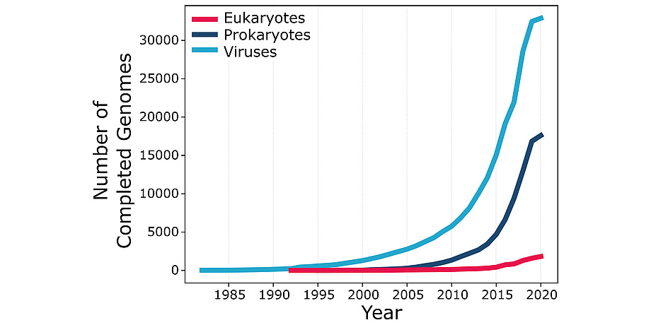 """A graph with """"Number of Completed Genomes"""" from 0 to 30.000 on the Y- and """"Year"""" from 1985 until 2020 on the X-axis. A blue line shows viruses, a dark blue line prokaryotes and a pink line eukaryotes. The blue linke starts at 0 and before 1985 and ends at 30.000 and 2020. The dark blue line starts at approximatly 0 and 2000 and ends at 15.000 and 2020. The pink line starts just after 1990 ans 0 and ends at just above 0 and 2020."""