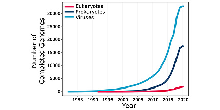 "A graph with ""Number of Completed Genomes"" from 0 to 30.000 on the Y- and ""Year"" from 1985 until 2020 on the X-axis. A blue line shows viruses, a dark blue line prokaryotes and a pink line eukaryotes. The blue linke starts at 0 and before 1985 and ends at 30.000 and 2020. The dark blue line starts at approximatly 0 and 2000 and ends at 15.000 and 2020. The pink line starts just after 1990 ans 0 and ends at just above 0 and 2020."