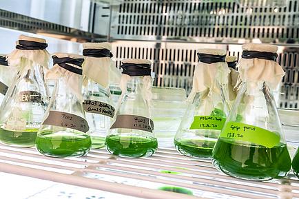 Glaskolben mit tiefgrüner Flüssigkeit