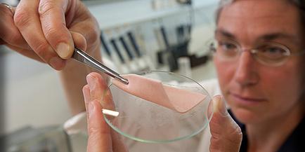 TU Graz-Forscherin hält Extrawurst in Petrischale hoch