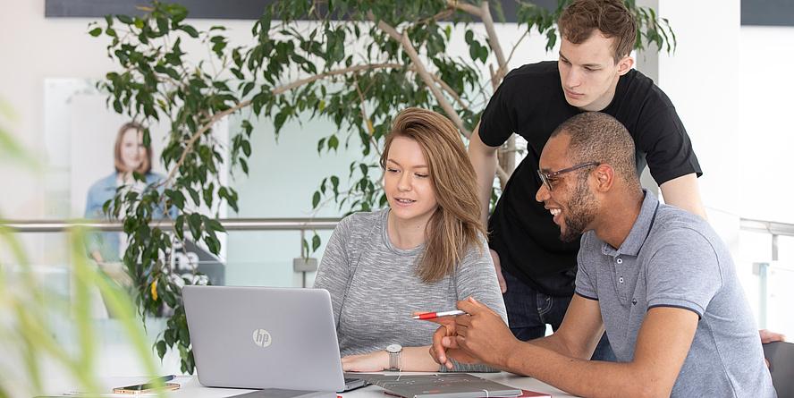 Eine Studentin und zwei Studenten arbeiten an einem Tisch gemeinsam an einem Laptop, hinter ihnen eine große Grünpflanze.