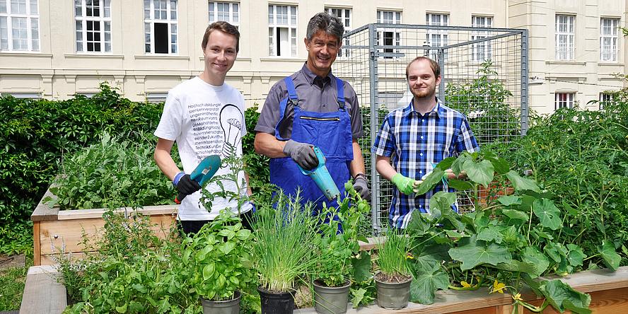 Drei Männer stehen hinter einem voll bepflanzten Hochbeet und halten unterschiedliche Gartengeräten in der Hand.