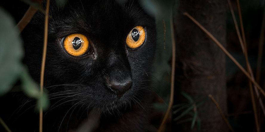 schwarze Katze mit leuchtend gelben Augen
