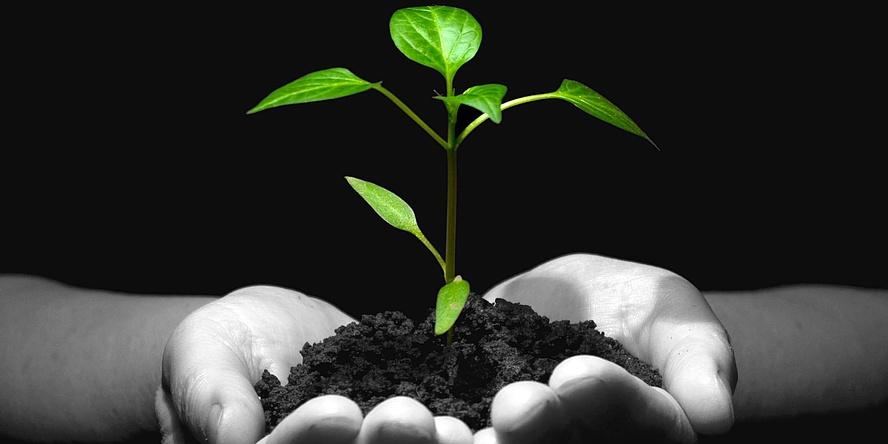 Eine junge grüne Pflanze wächst aus einem Erdhäufchen, gehalten von zwei Händen. Nur die Pflanze ist grün dargestellt, die Hände schwarz-weiß vor schwarzem Hintergrund.