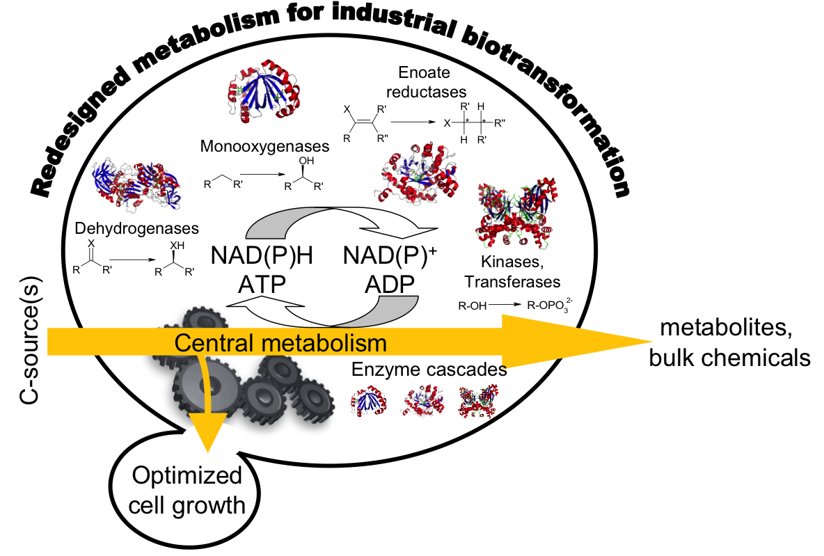 thesis on biocatalysis