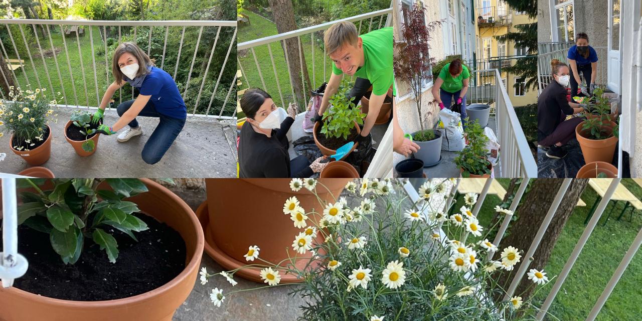 balcony, plants, sustainability